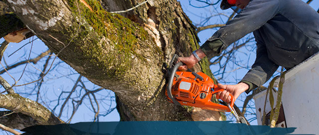 Why Pruning Your Trees is Important